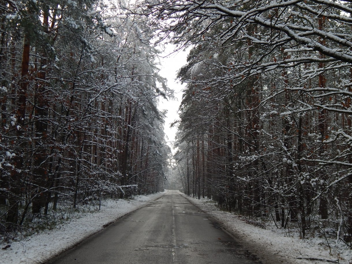 Leśne klimaty, NATURA INSPIRUJE NAJPIĘKNIEJ...