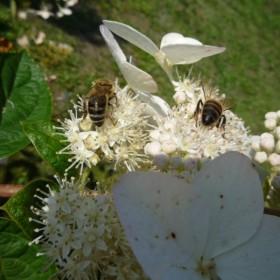 kwiatowo-motylkowo