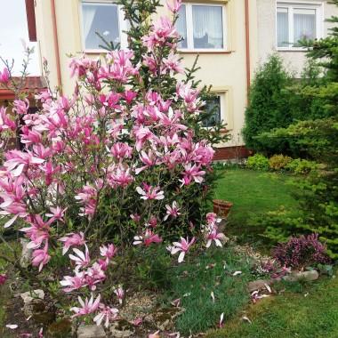Majówka i ogród