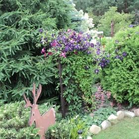 Ogród moja miłość.