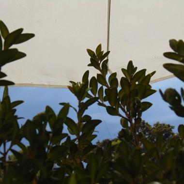 ...............i balkonowa fotka....................