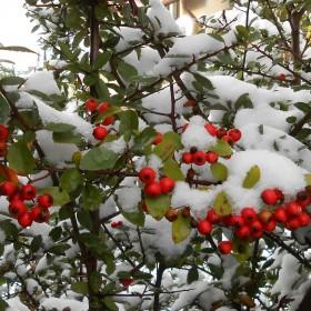 Październikowy śnieg