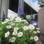 Rośliny, Wiosna :)