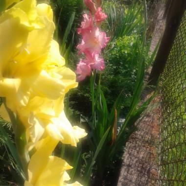 Miesiąc leci za miesiącem ... ajajaj ... już prawie jesień :) znowu zacznę odliczanie do wiosny :)