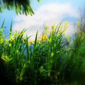 Wiosna szaleje &#x3B;)