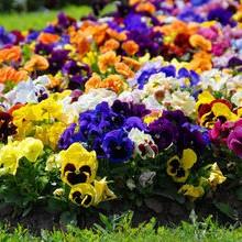 Kwiatki, bratki...
