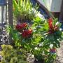 Realizacje, Wiosna zawitała na dobre - rododendron