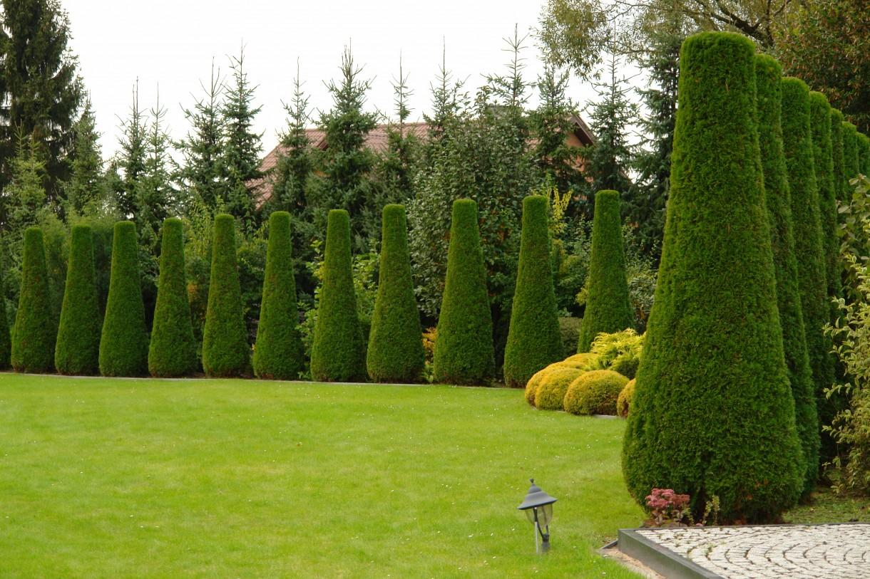 Rośliny, Topiary
