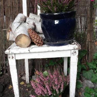 zdobycz ze strychu od babci... niestety już w kiepskim stanie ale do ogrodu ok..