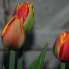 wiosna ciąg dalszy..