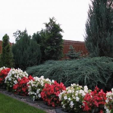 murek oporowy z gazonu = doskonałe kwietniki na rośliny sezonowe