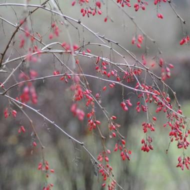 Dziś w ostatnim dniu listopada uwieczniłam leśny ogród .Od jutra czas adwentu i przygotowań do Świąt ,więc pewnie wszystkie skupimy się na świątecznych dekoracjach .Tymczasem zapraszam  na spacer po listopadowym lasku :)