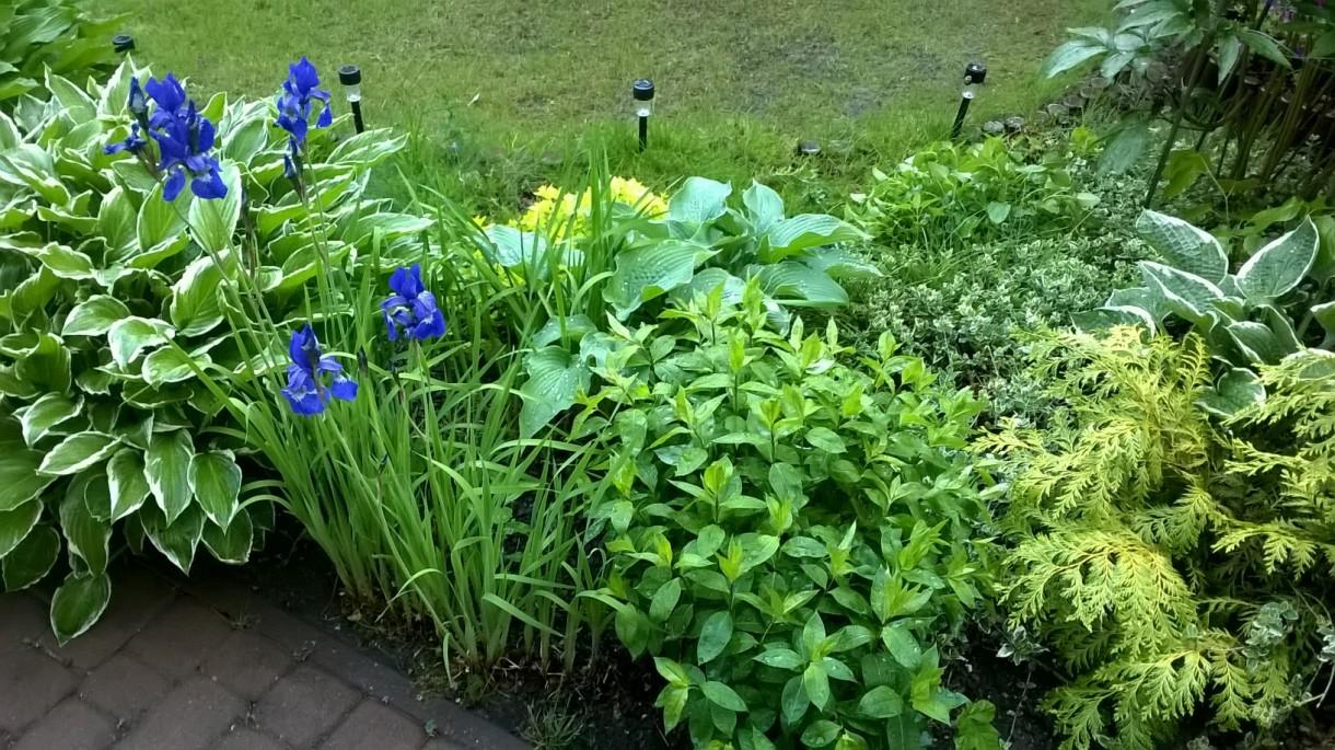 Ogród, Wiosna rozszalała się