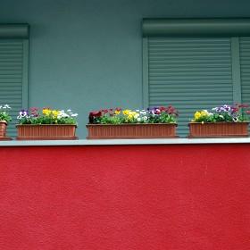 Piękny balkon na lato. Jakie rośliny wybrać?