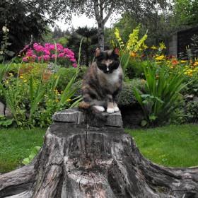 sesja pieńkowa:) moje trzy modelki w ogrodzie....