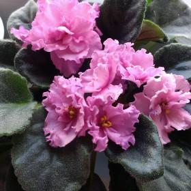 parapetowe kwiatuchy