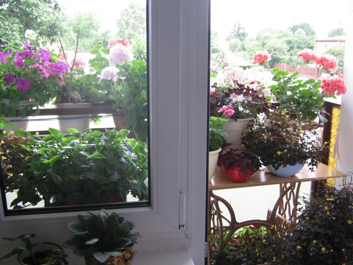 Balkon, Balkonowy ogród