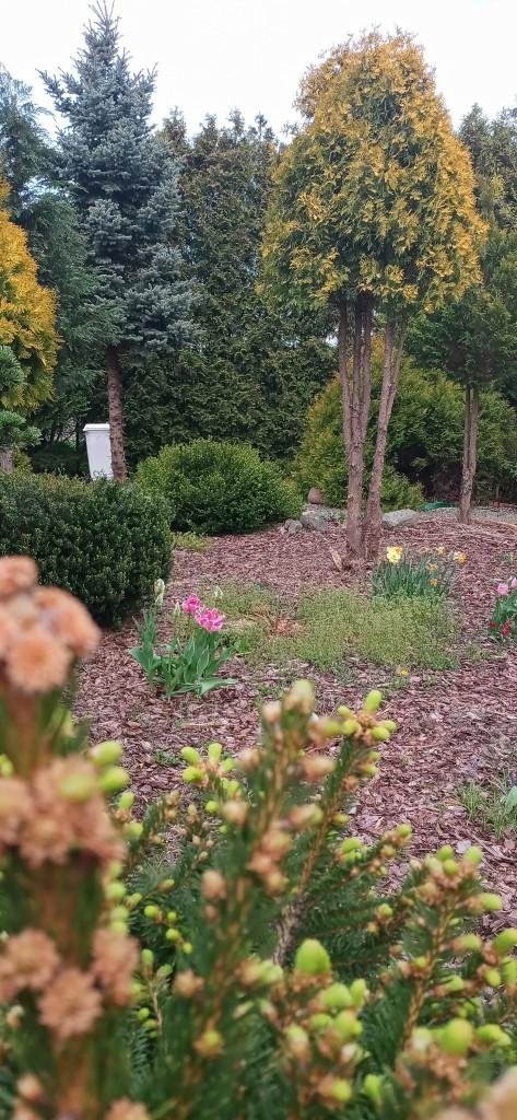 Ogród, Ogród wiosenny