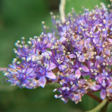 Kwiaty kwiatowo i kwieciście