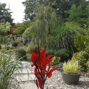 Ogród i rośliny