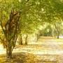 Rośliny, Złoto jesieni i moje zielone bombki..... - ..............i słoneczna,  jesienna aleja................
