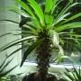 Rośliny, zielony parapet
