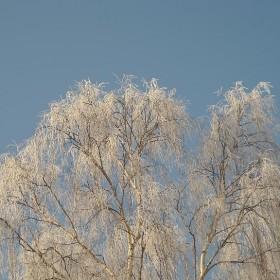 Drzewa w  zimowej szacie.............................