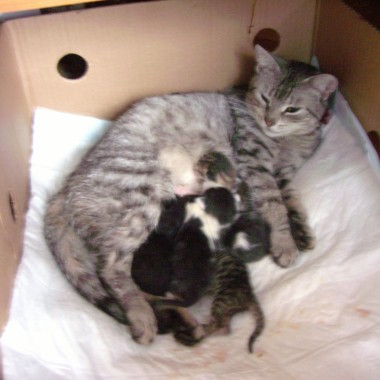 Fruzia z kociakami