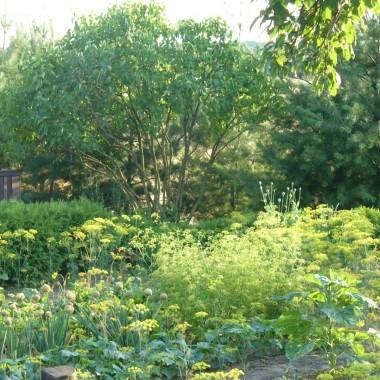 Mój zaczarowany ogród &#x3B;)