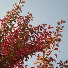 Jesień nad stawkami...............