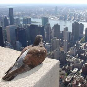 Wielkie miasto NY..