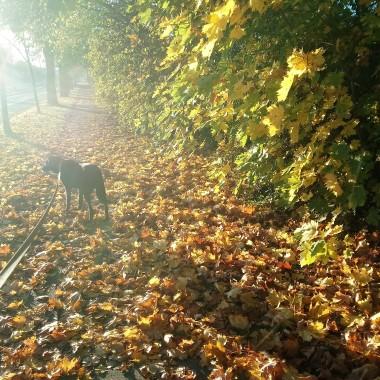 ............i poranny spacer z psem .............