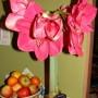 Pozostałe, Wielkanocny amarylis (hiperastrum) - Amatrylis wielkanocny