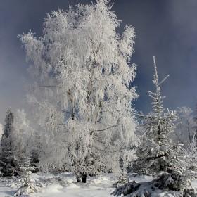 zimowe klimaty