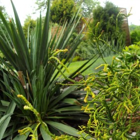 Ogród, dom i pachnąca piwonia.