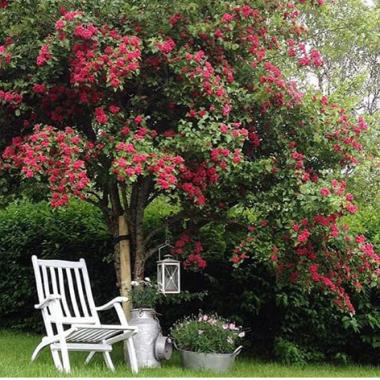 Wiosna tuż tuż czas pomyśleć o ogrodzie .Może ta galeria zainspiruje do tworzenia pięknych ogrodów (zdjęcia zapożyczone z internetu)