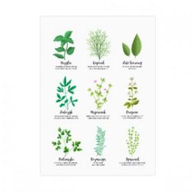 Magnes na lodówkę - Kolekcja zioła. Tymianek