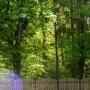 Pozostałe, Moje własne leśne lato... - Moi sąsiedzi zza płotu... hihi