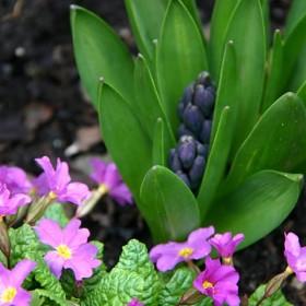 wiosenne początki w ogródku