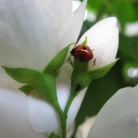 kwiaty w moim czerwcowym ogrodzie