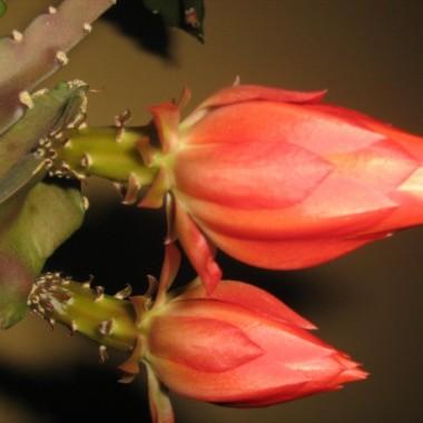 kwiaty po prostu