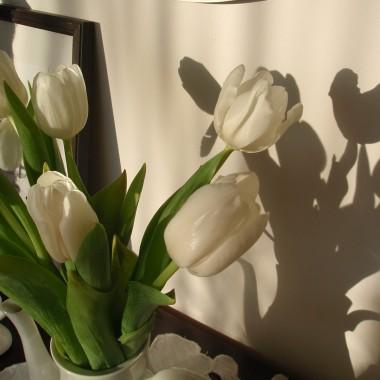 Czas na tulipany....