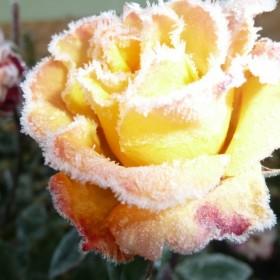 wiosna zimą