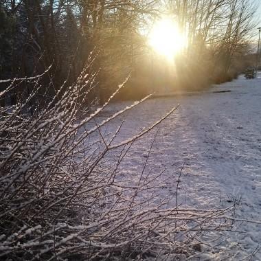 ............białe udekorowane krzewy i drzewa .....