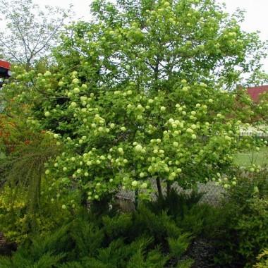 Przedstawiam Wam mój ogródek na przełomie kilku miesięcy 2009 roku.