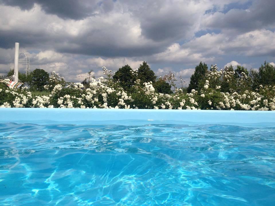 Ogród, W moim ogrodzie - Różany basen