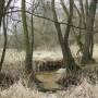 Leśne klimaty, WIOSNY CZAS...