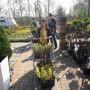 Ogród, Ogród wiosną... - Nowa rabata -zakupy