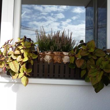 balkonowa jesień