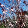 Ogród, Ogród wiosną...